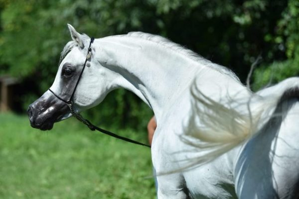Welcome Farhoud Al Shaqab