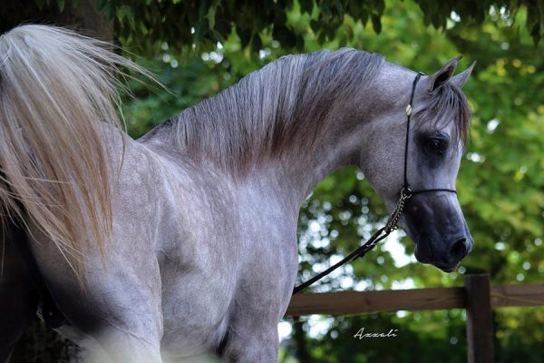 Egyptian Event Europe  2017